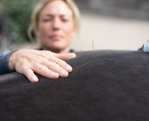 Hunde und Pferde mit Akupunktur naturheilkundlich behandeln: Tierheilpraxis Ina Wattenberg