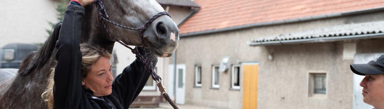 Mit Osteopathie Beschwerden im Bewegungsapparat lindern: Tierheilpraxis und Osteopathie Ina Wattenberg