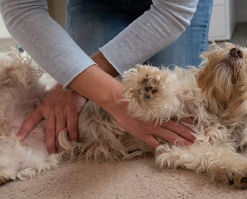 Hunde natürlich naturheilkundlich behandeln: Ina Wattenberg