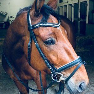 Tierheilpraxis und Osteopathie beim Pferd: Ina Wattenberg
