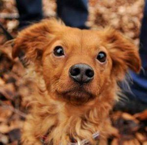Osteopathie beim Hund: Referenz-Hund Mailo