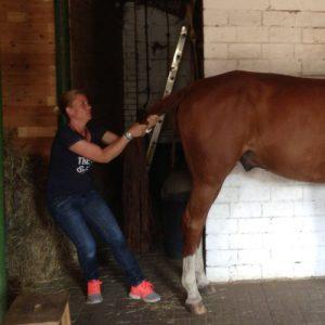 Osteopathie beim Pferd: Referenz Ina Wattenberg, Favorit