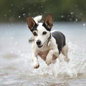 Osteopathie beim Hund, Referenz Ina Wattenberg, Emmy